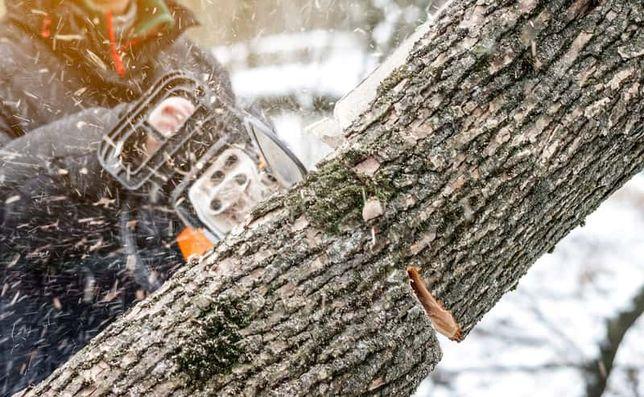 usługa wycinki wycinka drzew