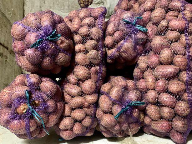 Продаю картофель (картошка) с доставкой