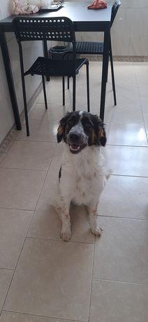Cadela com 7 meses adoção