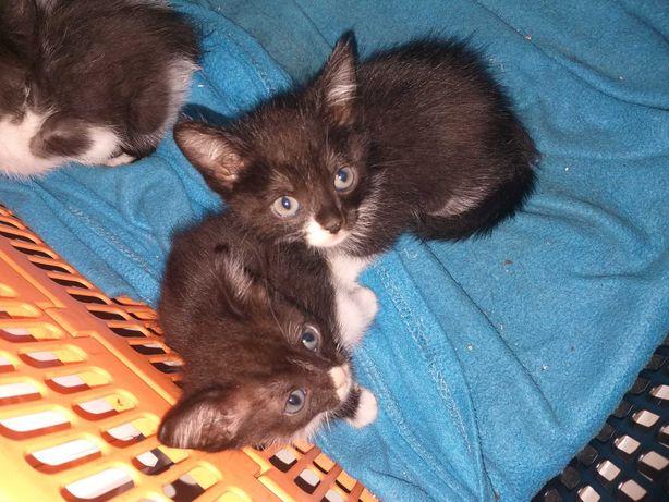 2 gatas para adoção