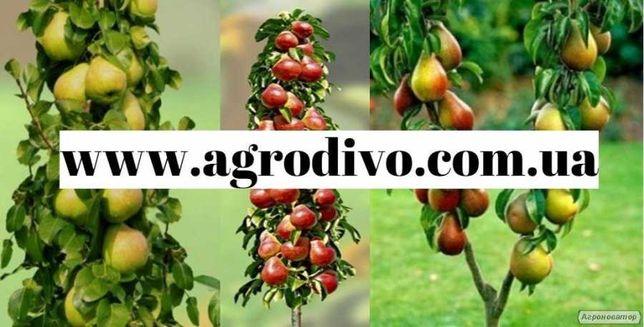 Саженцы плодовых деревьев (колоновидные, среднерослые), кустарник,розы