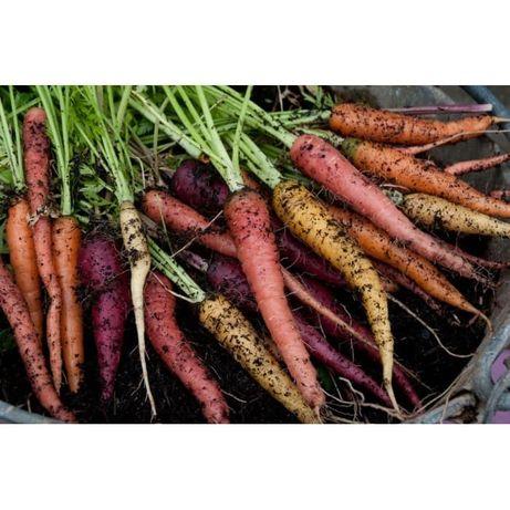 Sementes de Cenouras Biológicas - Mix cores
