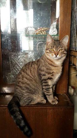 Котик-шпротик Вася