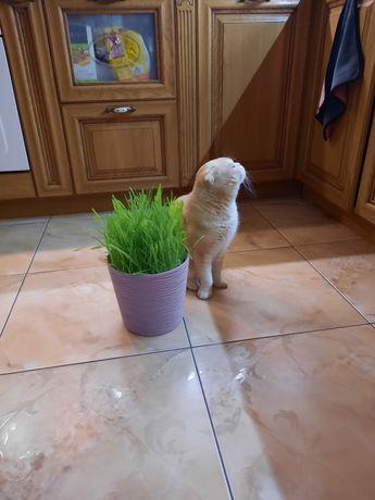 Вяжущий кот с родословной