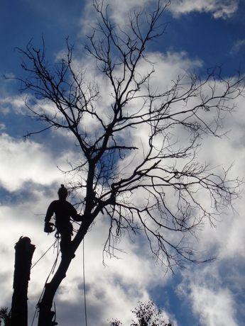 Спил деревьев, выкорчовка пней, покос травы,уборка участков