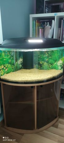 Akwarium narożne Corner