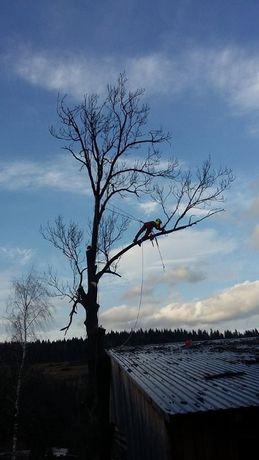 Wycinka drzew, pielęgnacja drzew, prace wysokościowe, ogrodnictwo.