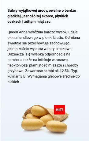 Sadzeniaki Queen Anne 0,80 gr/kg