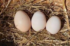 """Jajka wiejskie z wolnego wybiegu """"DUŻE"""" 30szt DOWÓZ GRATIS !!"""