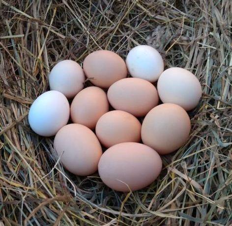 Jajka wiejskie 70 groszy za sztukę