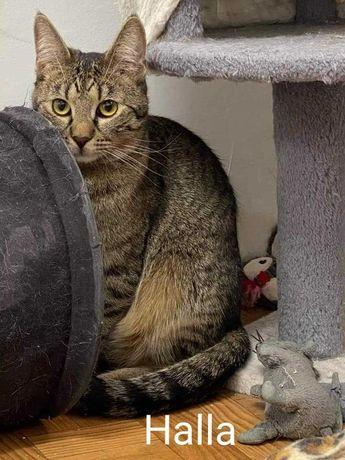 Roczna kotka czeka na dom, najlepiej z innym kotem