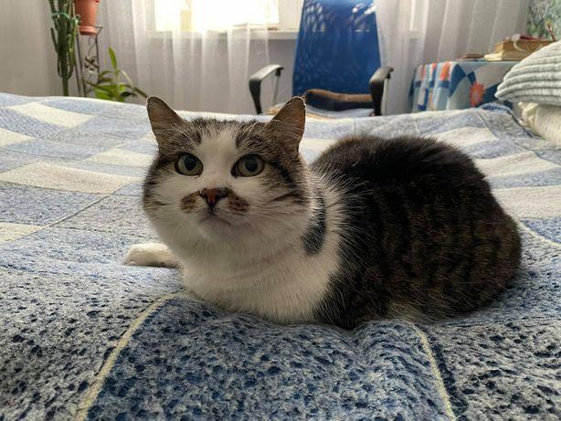 Кроткая кошечка Симочка