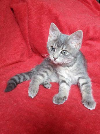 Домашний котенок девочка в добрые руки. Возраст 4 месяца