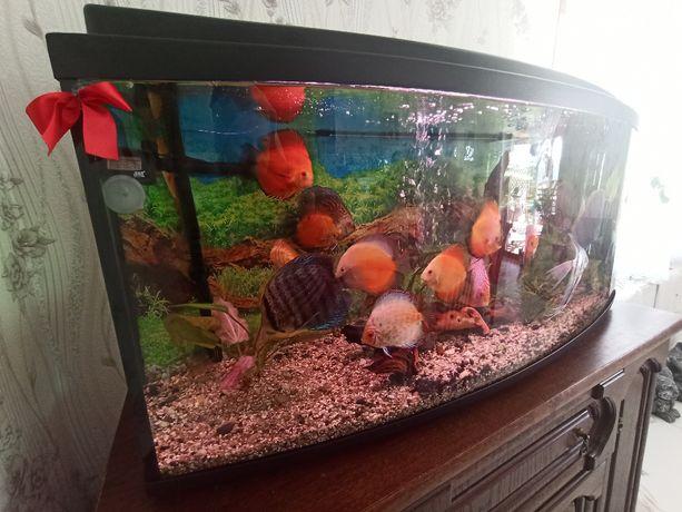 Akwarium 240 litrów