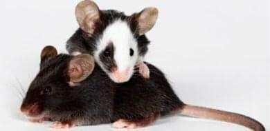 Oddam myszki w dobre ręce