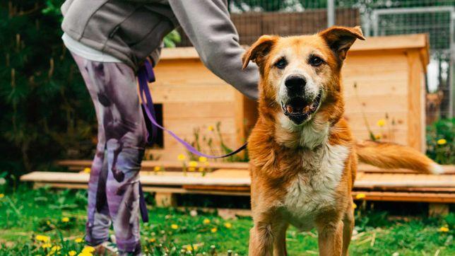 Miluś- kochany psiak czeka na dom
