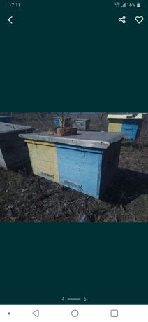Продам пчел,пчелосемьи,пасека