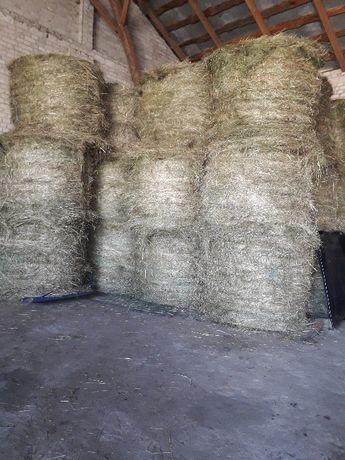 Siano w belach 28 sztuk 1 pokos suche pachnoce polecam duze bele