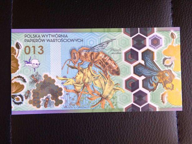 Banknot Testowy PWPW Pszczoła Miodna 013
