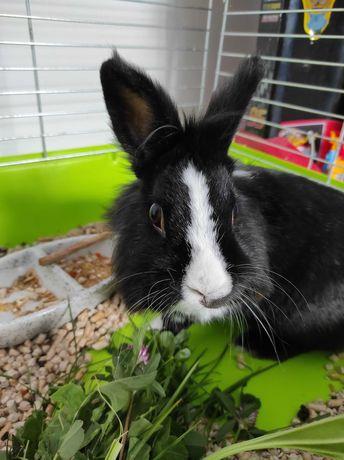 Samiczka królika + klatka