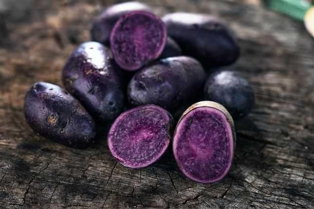 Ziemniaki fioletowe jadalne
