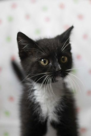 Cudowny kotek pragnie domu