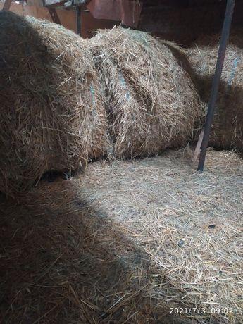 Солома пшеничная и житня.
