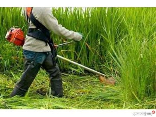 Koszenie trawy ogród cięcia żywopłotu