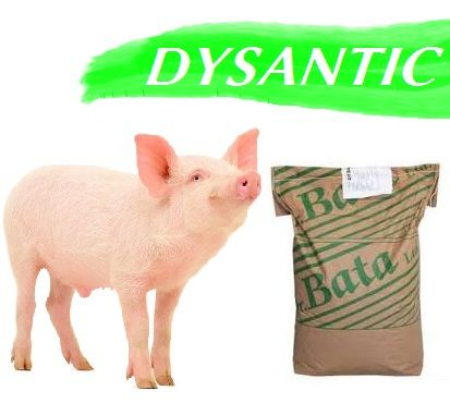 Biegunki to już nie problem! Pożegnaj DYZENTERIĘ z Dysantic dla świń