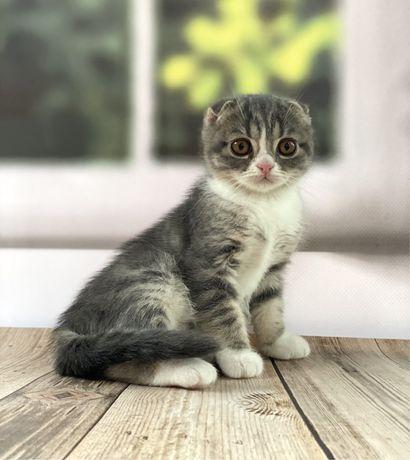 Котенок деаочка со сказочными глазами, котята на подарок