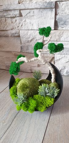 Drzewko bonsai Mech chrobotek kompozycja sukulenty