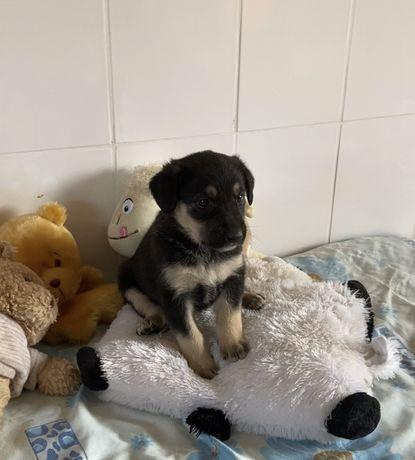 Джули 1 месяц, собака, собачка щенок