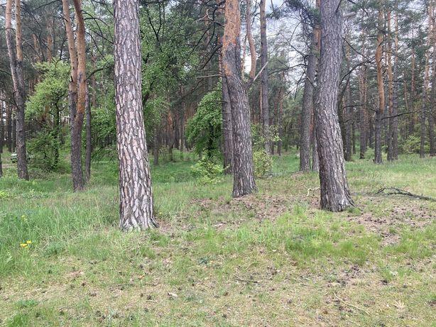 Продам участок в живописной местности с выходом в лес, с. Мощун