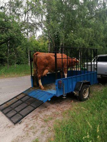 Перевезення ВРХ,та коней