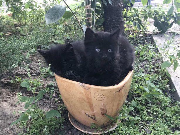 Маленькие котята ищут дом