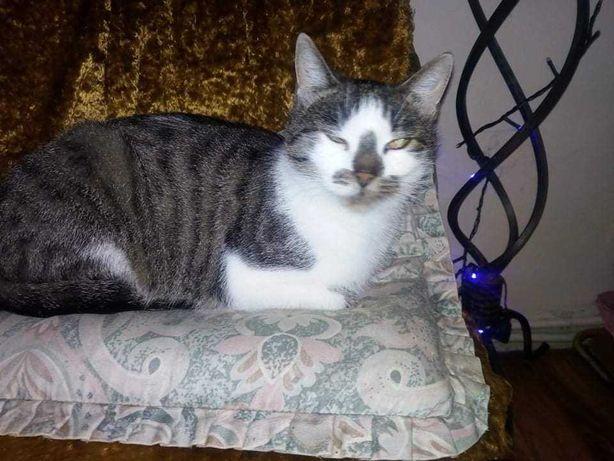 Klara,sliczna koteczka po ogromnych przejsciach,