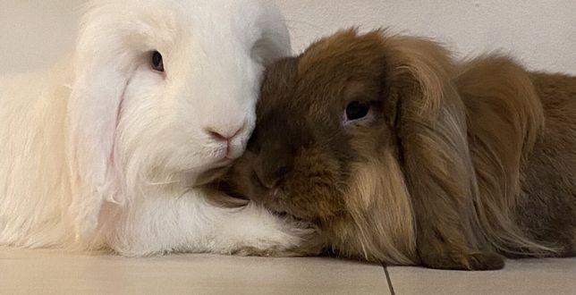 Отдам кроликов
