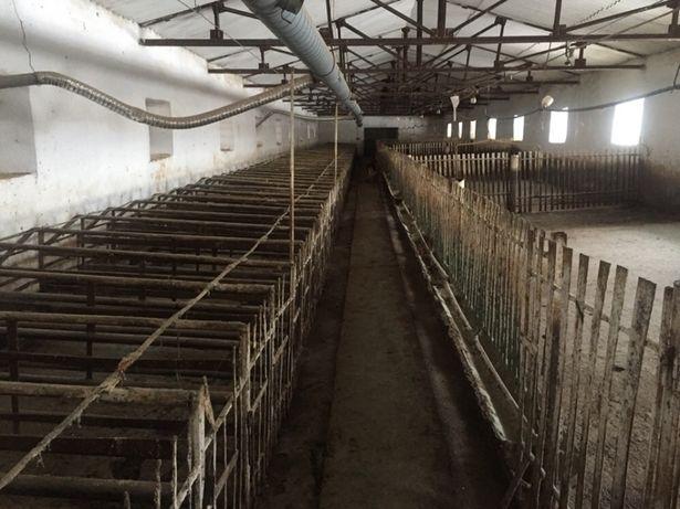 Ферма для тварин,оренда,продаж
