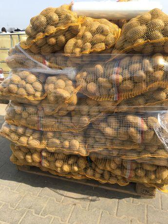 Ziemniaki Denar Vineta Soraya jadalne