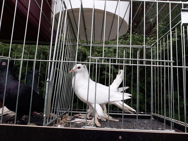 Gołębie mewki budapeszty bociany pocztowe