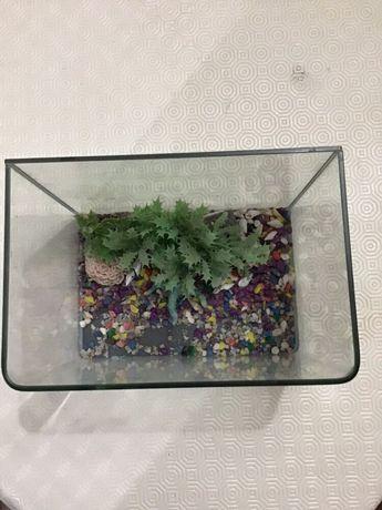Aquário de pequenas dimensões para pequenos peixes ou tartarugas