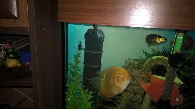 продам аквариум 240л итальянский ферпласт дубай 120
