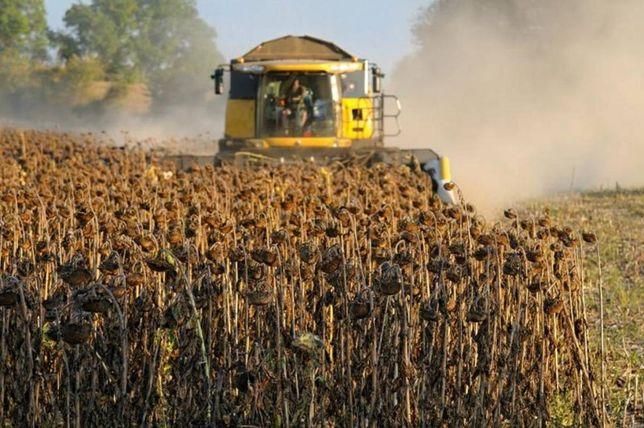 Уборка урожая подсолнуха. Вышгородский район
