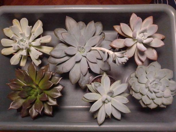 Комнатные цветы сукуленты,и лиственные