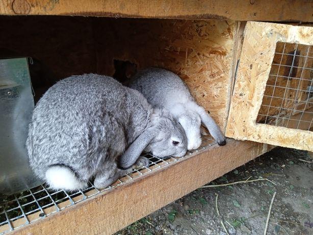 Продам крольчих 4месяца