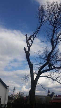 ---Wycinka drzew trudnych---Wycinka z podnośnika---Darmowa wycena---