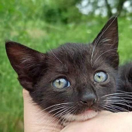 Прекрасный идеальный котенок мальчик Макс 2 месяца