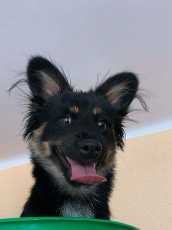 Mam do oddania psa 8 miesięcznego
