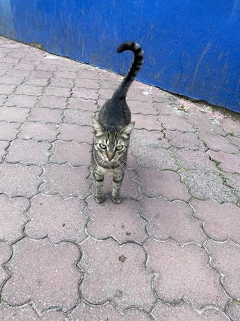 Кошечка ищет хорошего хозяина!!!Помогите найти хорошего хозяина!!!