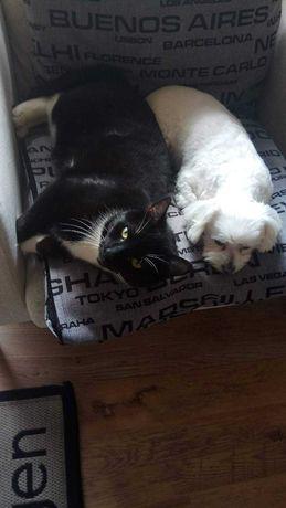 Zaginął kot na Rembelszczyźnie w okresie świątecznym.